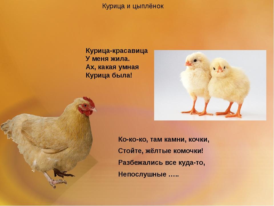 Курица-красавица У меня жила. Ах, какая умная Курица была! Курица и цыплёнок...