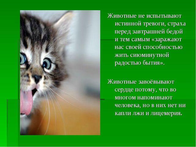 Животные не испытывают истинной тревоги, страха перед завтрашней бедой и тем...