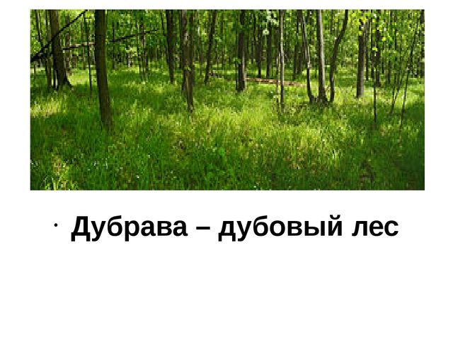 Дубрава – дубовый лес