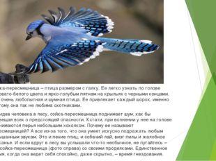 Сойка-пересмешница – птица размером с галку. Ее легко узнать по голове серова