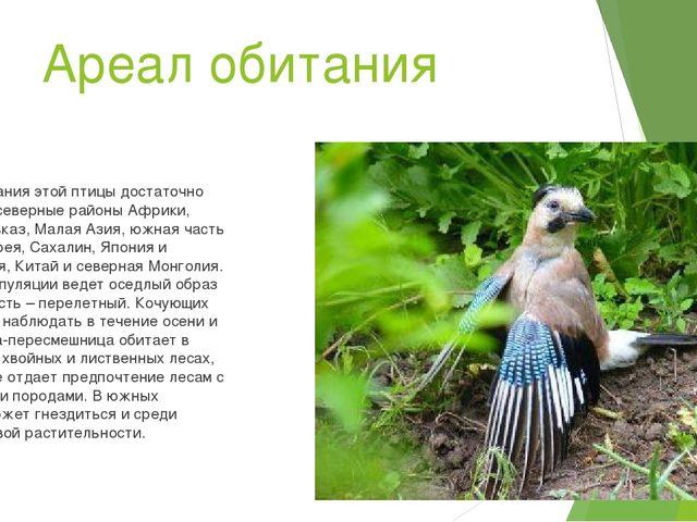 Ареал обитания Ареал обитания этой птицы достаточно обширный: северные районы...