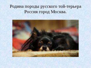 Родина породы русского той-терьера Россия город Москва.