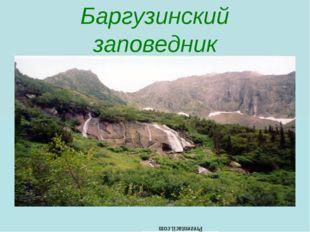 Баргузинский заповедник Prezentacii.com