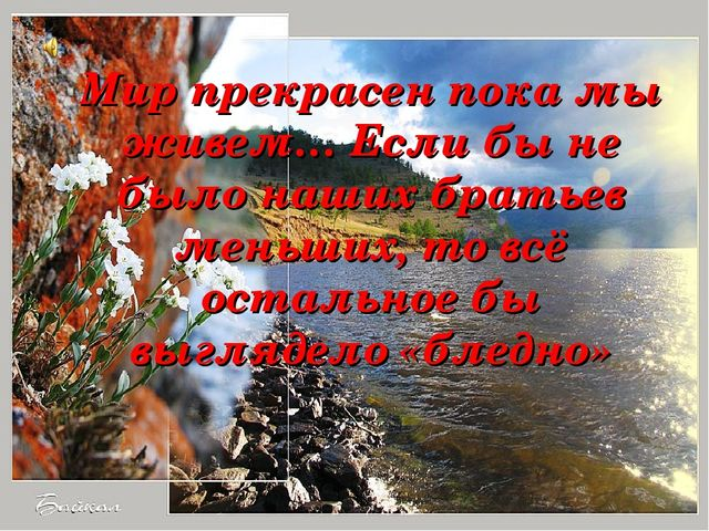 Мир прекрасен пока мы живем… Если бы не было наших братьев меньших, то всё о...