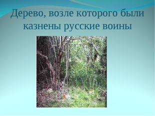 Дерево, возле которого были казнены русские воины