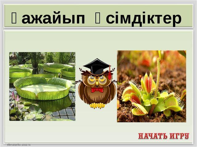 Ғажайып өсімдіктер