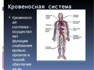 Кровеносная система Кровеносная система- осуществляет функции снабжения кров