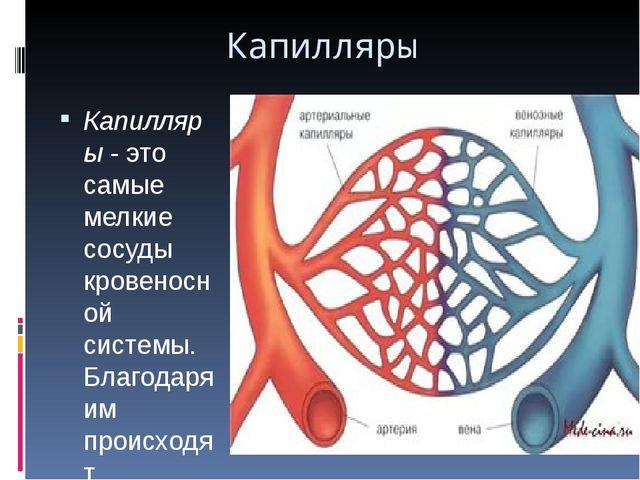 Капилляры Капилляры- это самые мелкие сосуды кровеносной системы. Благодаря...