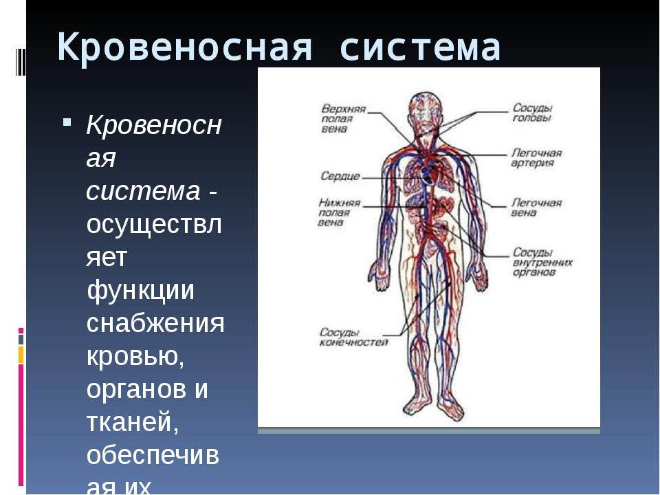 Кровеносная система Кровеносная система- осуществляет функции снабжения кров...