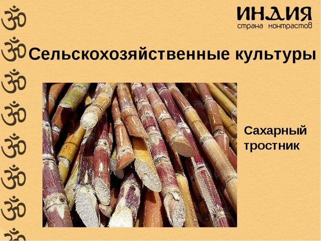 Сельскохозяйственные культуры Сахарный тростник