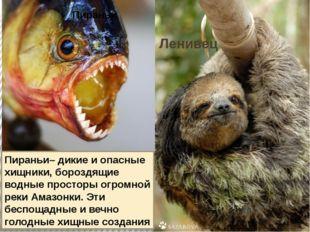 Ленивец Пираньи– дикие и опасные хищники, бороздящие водные просторы огромной