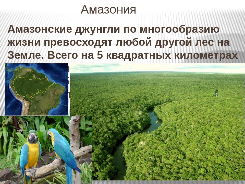 Амазония Амазонские джунгли по многообразию жизни превосходят любой другой ле...