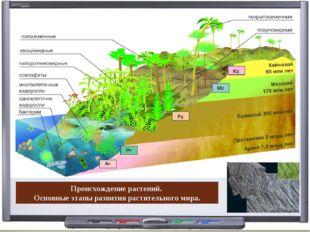 Происхождение растений. Основные этапы развития растительного мира.