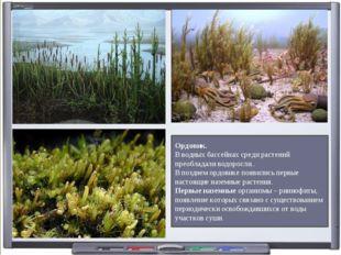 Ордовик. В водных бассейнах среди растений преобладали водоросли.. В позднем