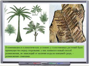 В изменившихся климатических условиях у голосеменных растений было преимущест