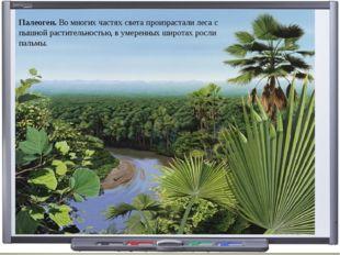 Палеоген. Во многих частях света произрастали леса с пышной растительностью,