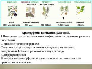 Ароморфозы цветковых растений. 1.Появление цветка и повышение эффективности о