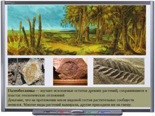 Палеоботаника — изучает ископаемые остатки древних растений, сохранившиеся в