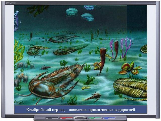 Кембрийский период – появление примитивных водорослей