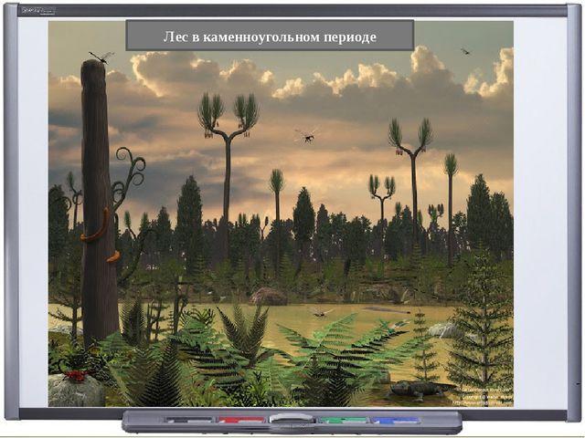 Лес в каменноугольном периоде