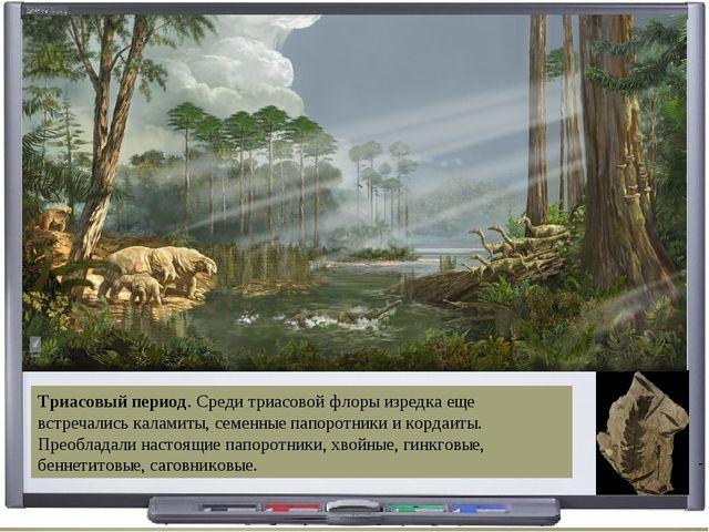 Триасовый период. Среди триасовой флоры изредка еще встречались каламиты, сем...