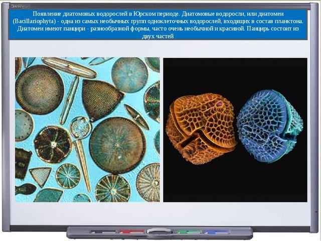 Появление диатомовых водорослей в Юрском периоде. Диатомовые водоросли, или д...