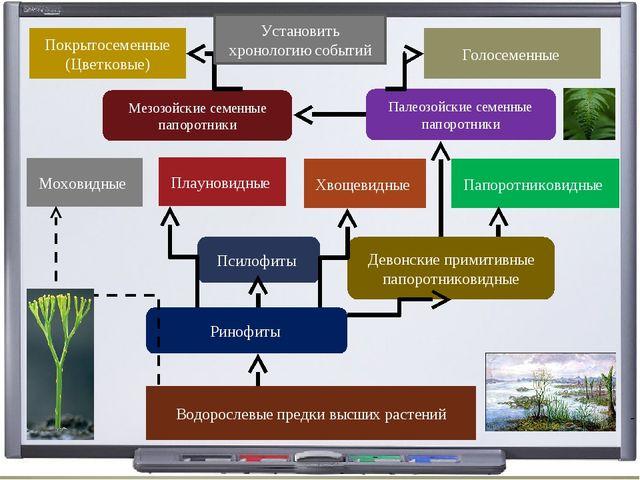 Водорослевые предки высших растений Ринофиты Псилофиты Девонские примитивные...