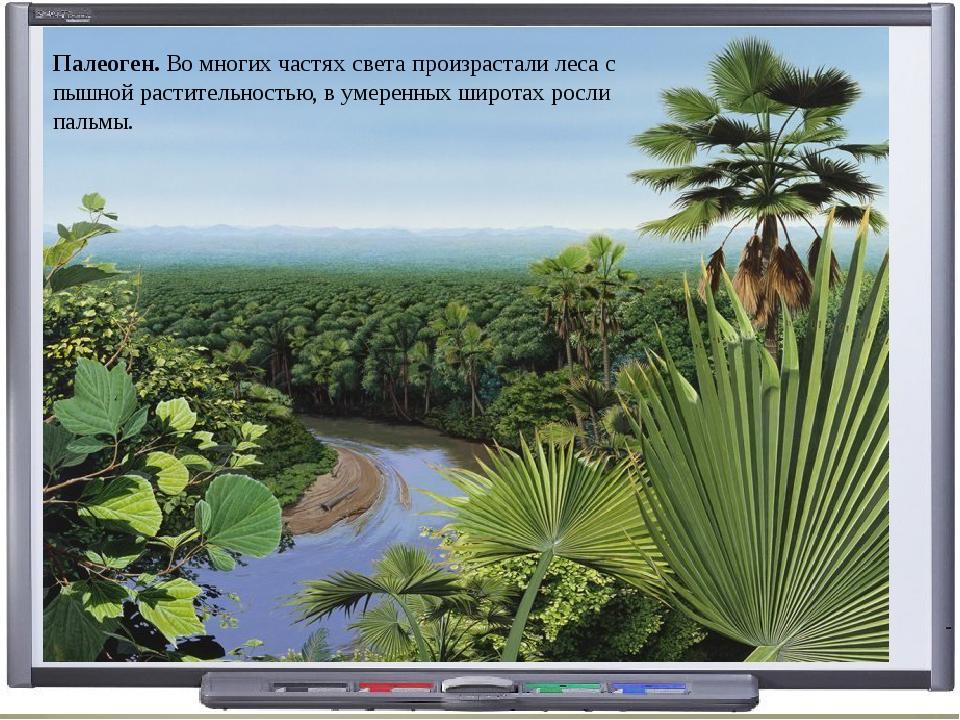 Палеоген. Во многих частях света произрастали леса с пышной растительностью,...