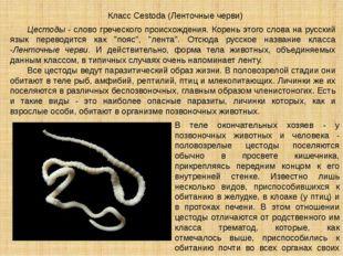 Цестоды- слово греческого происхождения. Корень этого слова на русский язык