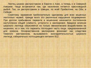 Лентец широко распространен в Европе и Азии, а теперь и в Северной Америке.