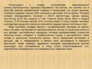 Относящийся к отряду Cyclophyllidea невооруженный цепень(Taeniarhynchus sag