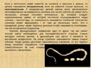 Если у ленточного червя имеются на сколексе и присоски и крючья, то цепень на