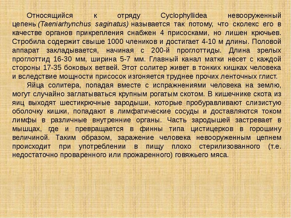 Относящийся к отряду Cyclophyllidea невооруженный цепень(Taeniarhynchus sag...