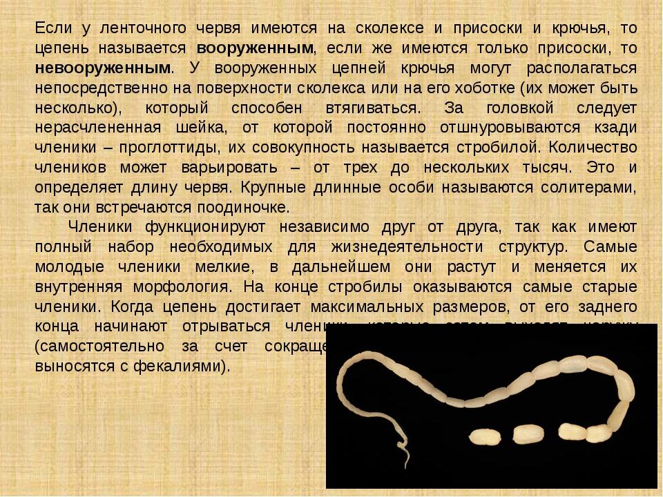 Если у ленточного червя имеются на сколексе и присоски и крючья, то цепень на...