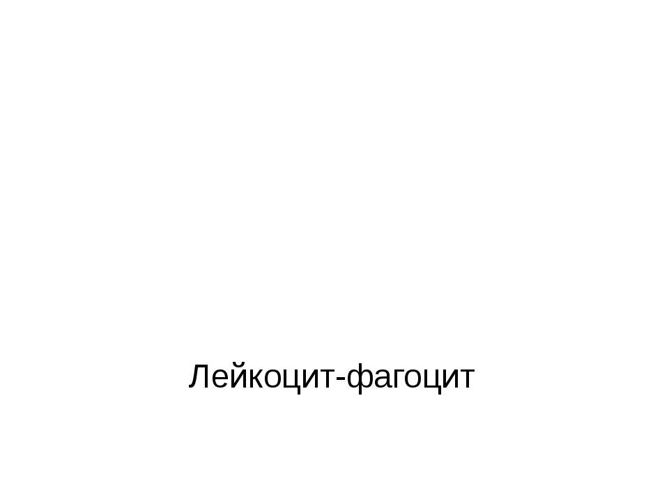 Лейкоцит-фагоцит