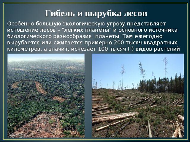 Гибель и вырубка лесов Особенно большую экологическую угрозу представляет ист...