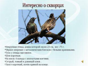Некрупная птица, длина которой около 23 см, вес -75 г. Чёрное оперение с мета