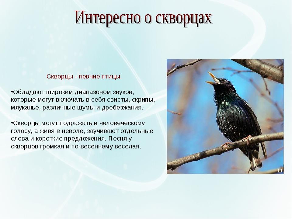 Скворцы - певчие птицы. Обладают широким диапазоном звуков, которые могут вкл...