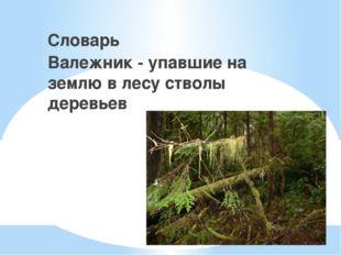 Словарь Валежник - упавшие на землю в лесу стволы деревьев
