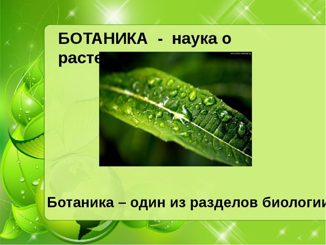 БОТАНИКА - наука о растениях Ботаника – один из разделов биологии