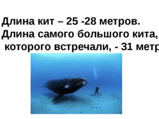 Длина кит – 25 -28 метров. Длина самого большого кита, которого встречали, -