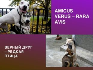 AMICUS VERUS – RARA AVIS ВЕРНЫЙ ДРУГ – РЕДКАЯ ПТИЦА