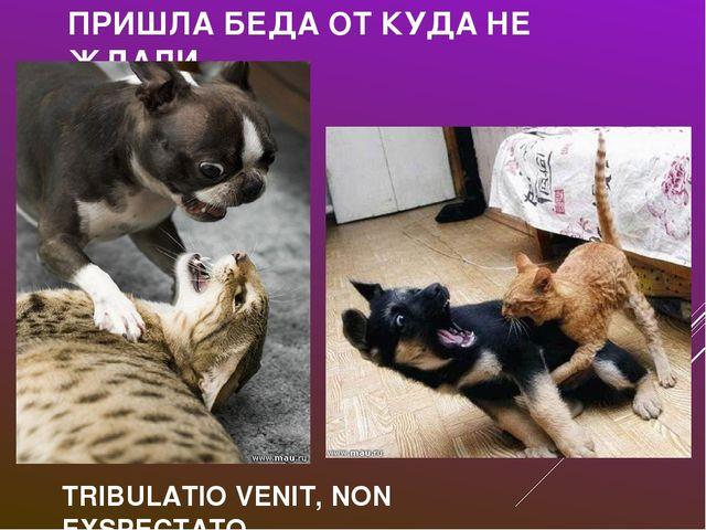 ПРИШЛА БЕДА ОТ КУДА НЕ ЖДАЛИ TRIBULATIO VENIT, NON EXSPECTATO