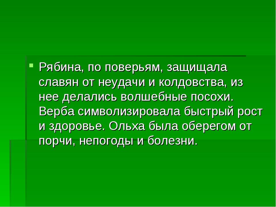 Рябина, по поверьям, защищала славян от неудачи и колдовства, из нее делались...