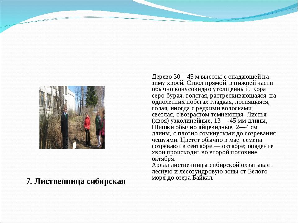 7. Лиственница сибирская Дерево 30—45 м высоты с опадающей на зиму хвоей. Ств...