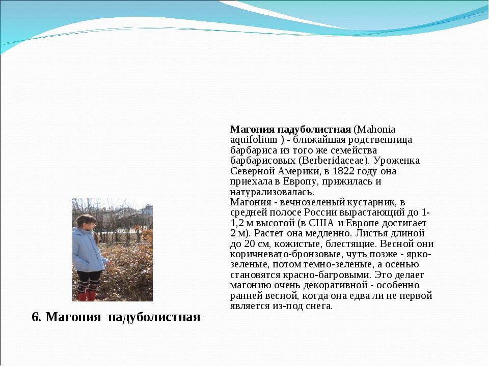 6. Магония падуболистная Магония падуболистная (Mahonia aquifolium ) - ближай...