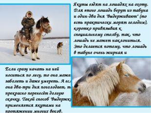 Масть якутских лошадей преимущественно серая, саврасая, мышастая. В лютые мор