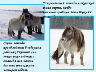 Среди якутских лошадей выделяются два типа: северный и южный. Они отличаются