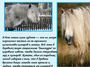 Сено зимой получают в основном лишь рабочие лошади (это, как правило, мерины)