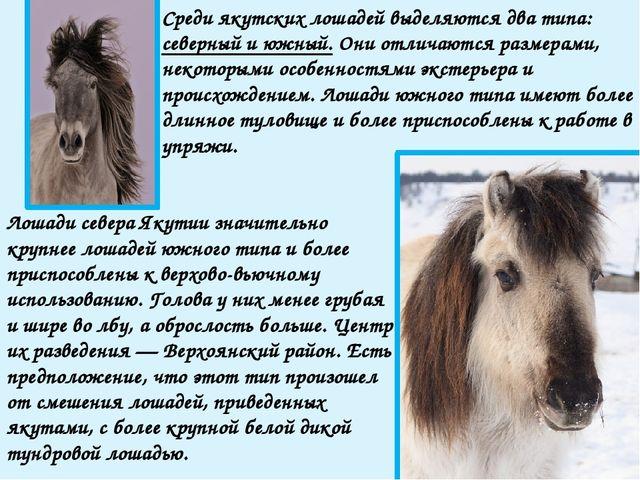 Ископаемые останки этой лошади, современницы мамонта, найдены Черским в 1878...